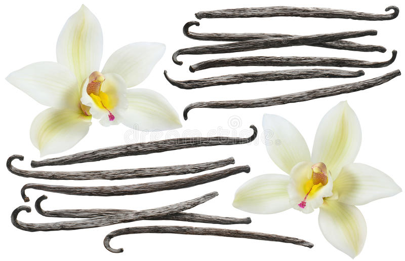 Vanilla bean element set isolated on white background stock images