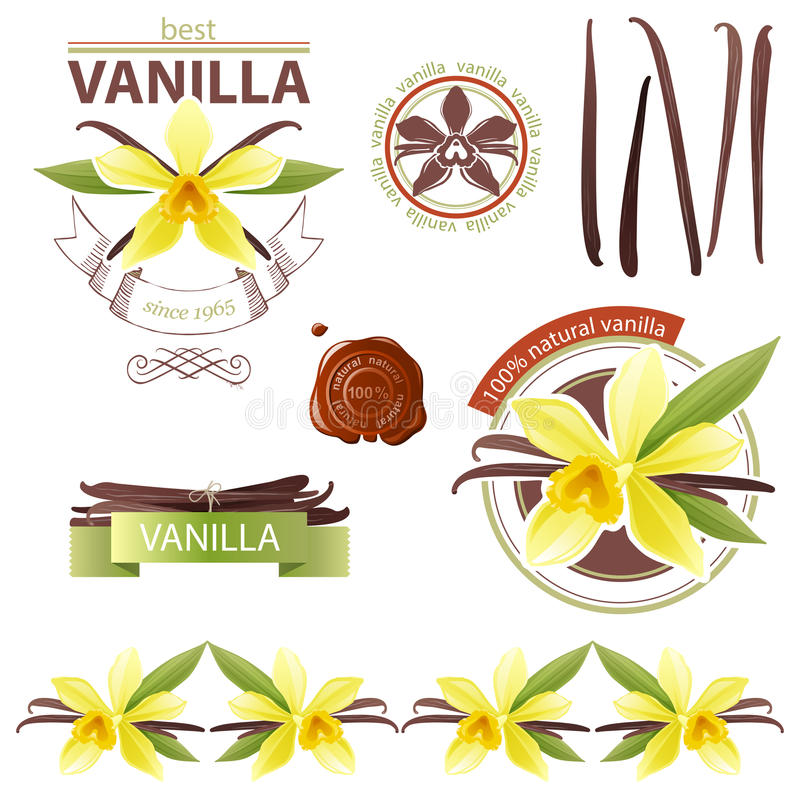 Download Vanilla stock vector. Image of orchid, organic, nature - 31743881