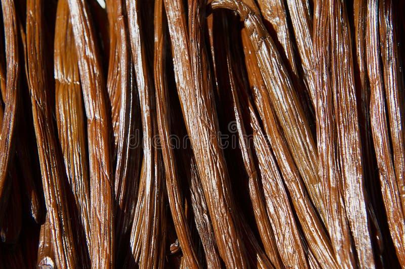 Vanilla dry fruit in the fermentation process for grading vanilla flavor at La Reunion island. royalty free stock image