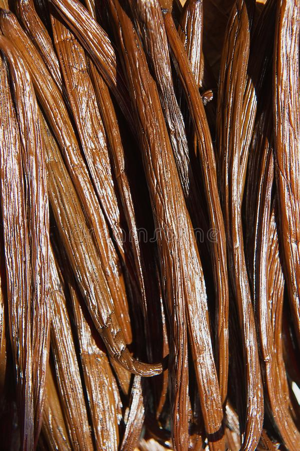 Vanilla dry fruit in the fermentation process for grading vanilla flavor at La Reunion island. royalty free stock photography