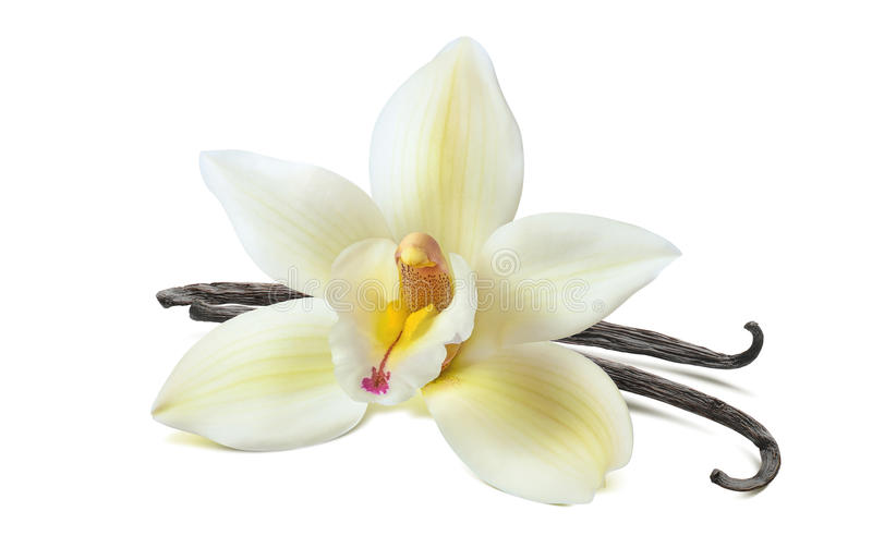 Vanilla flower 2 beans isolated on white background royalty free stock photography