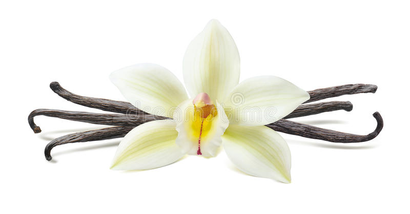 Vanilla flower pod symmetric composition isolated royalty free stock photos