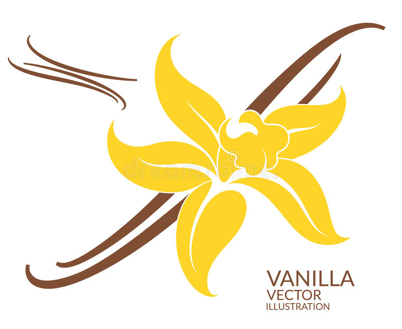 Vanilla. Flower vector illustration