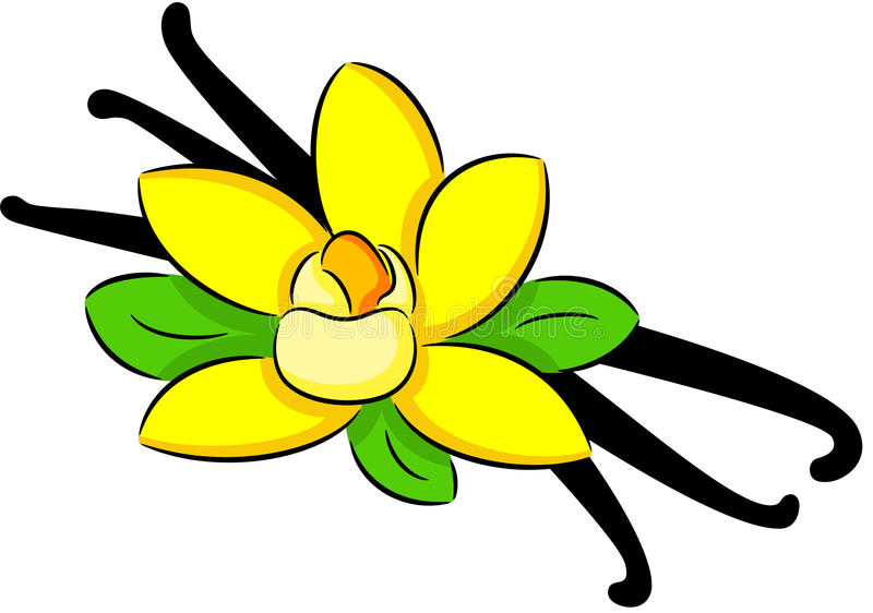 Vanilla Stock Vector. Image Of Blooming, Aromatic, Floral