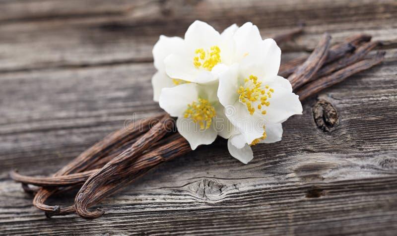 Vanilla pods with jasmine stock images