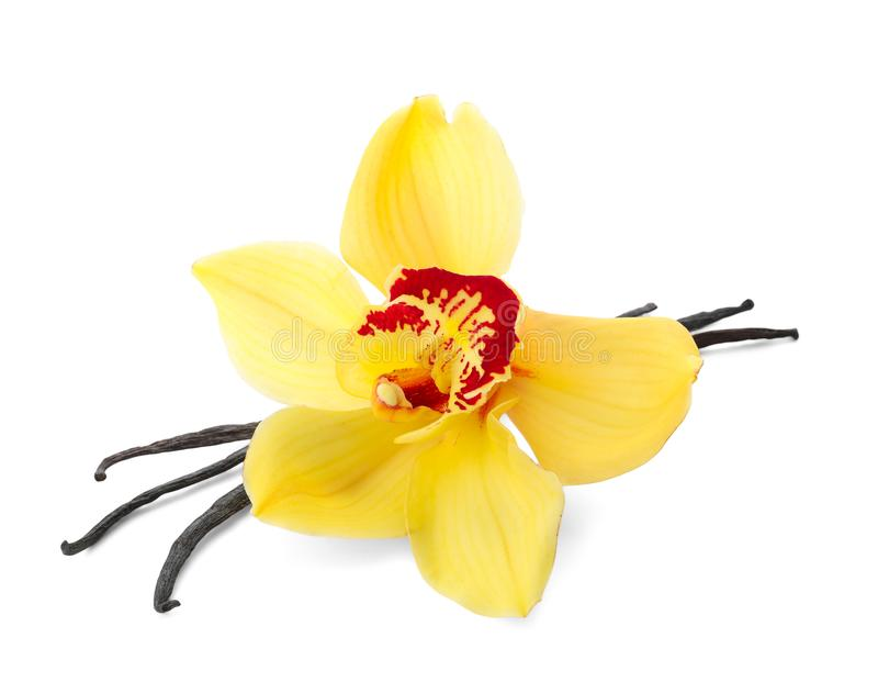 Vanilla sticks and flower. On white background stock photography