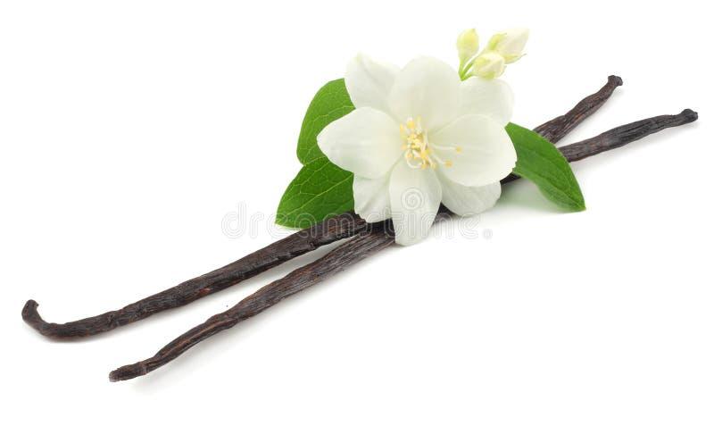 Vanilla sticks with white flower isolated on white background royalty free stock photos