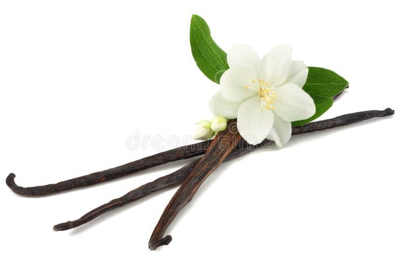 Vanilla sticks with white flower isolated on white background stock image