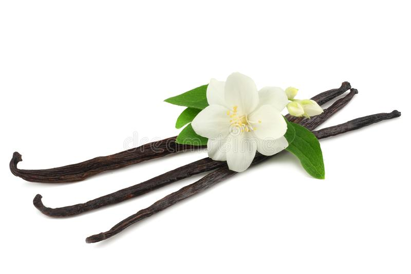 Vanilla sticks with white flower isolated on white background stock photo