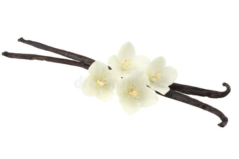Vanilla sticks with white flower isolated on white background royalty free stock image