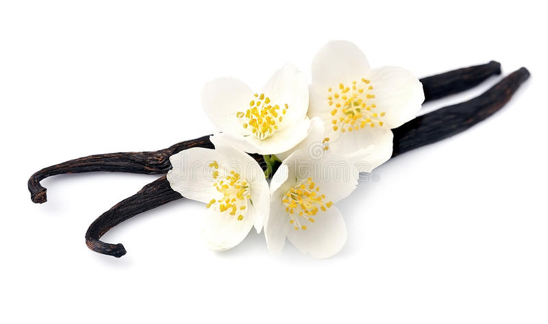 Vanilla sticks with white flowers. On white backgrounds stock image