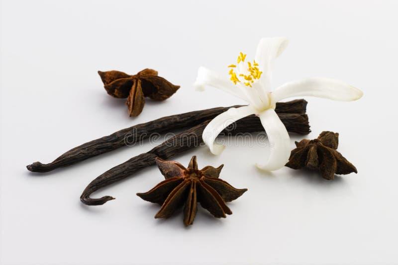 Vanille, anijsplant, bloem royalty-vrije stock fotografie