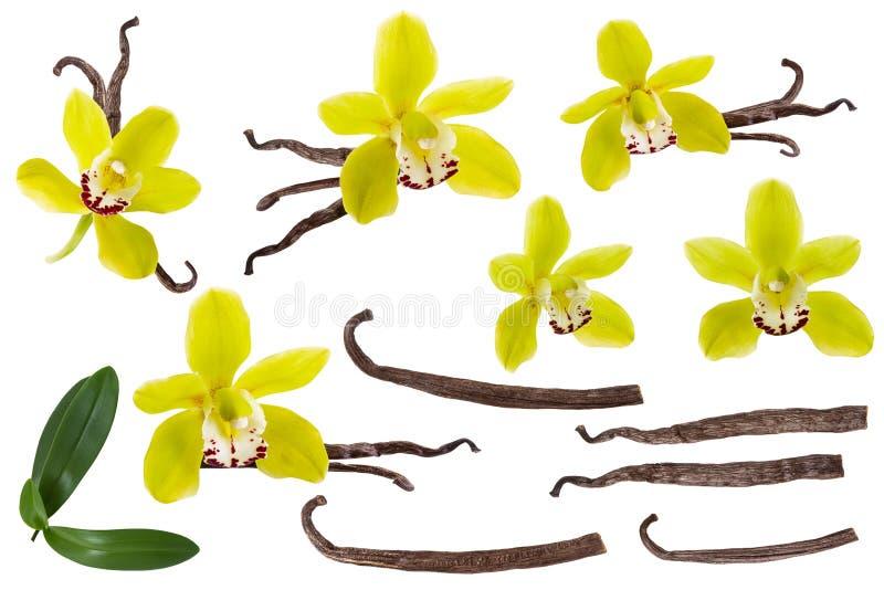 Vanille d'isolement sur l'ensemble blanc de fond Fleur jaune d'orchidée, bâton ou collection de haricot et verte sèche de feuille photographie stock libre de droits