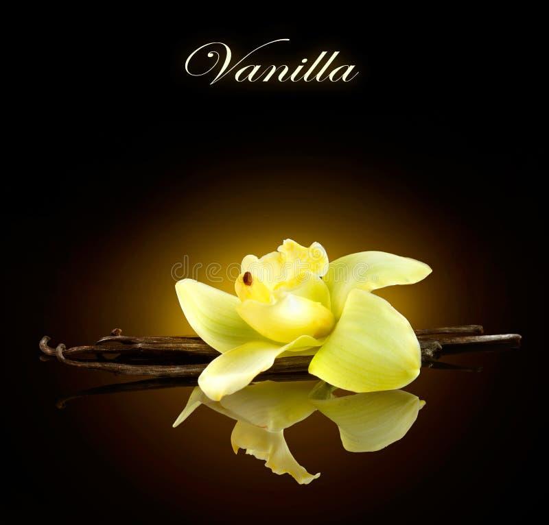 vanille Peulen en Bloem van vanille stock fotografie