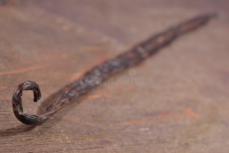 Vanilleboon stock afbeelding