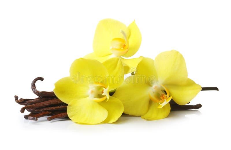 Vanillehülsen und Orchideenblumen lokalisiert lizenzfreie stockfotos