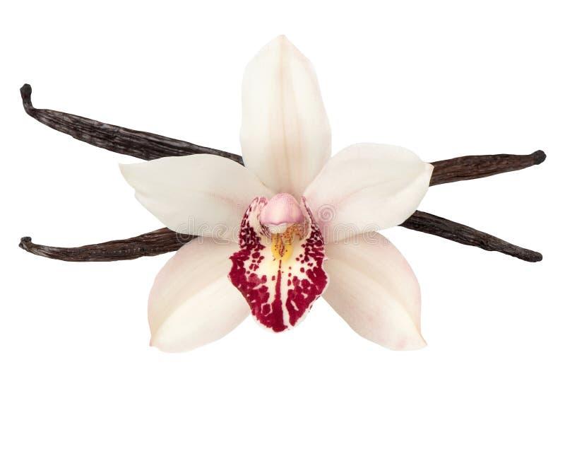 Vanillehülsen und Orchideenköpfchen lokalisiert auf Weiß lizenzfreies stockbild