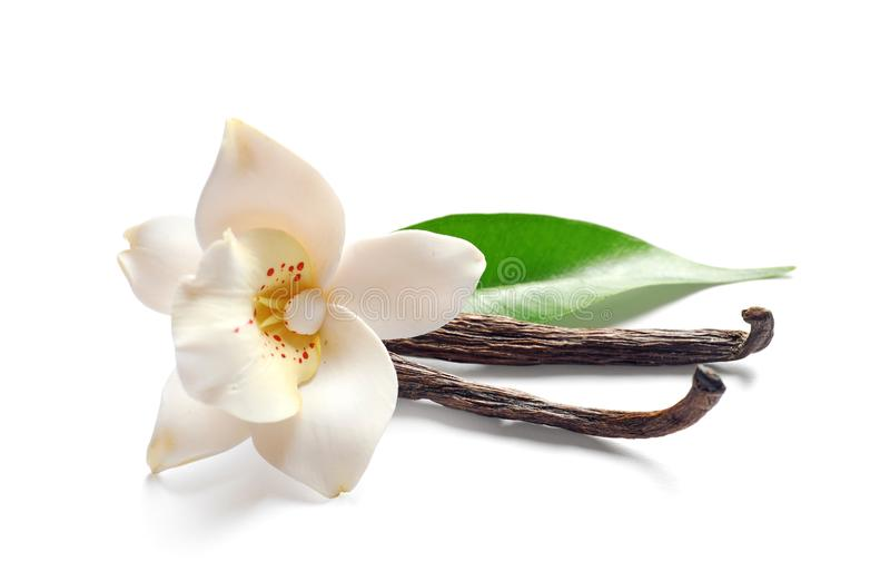 Vanillestokken en bloem stock fotografie