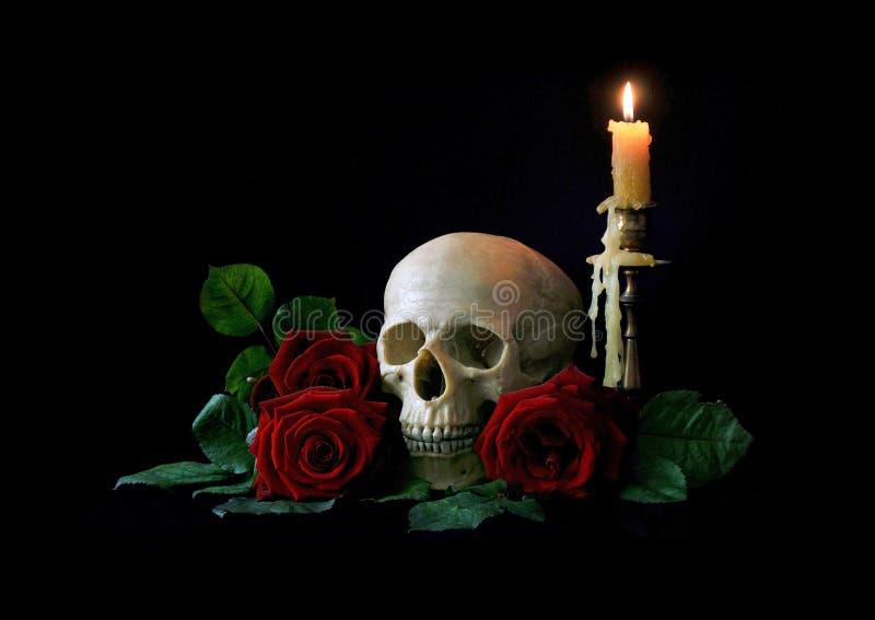 vanitas Menschlicher Schädel mit roten Rosen über schwarzem bagkground stockfotografie