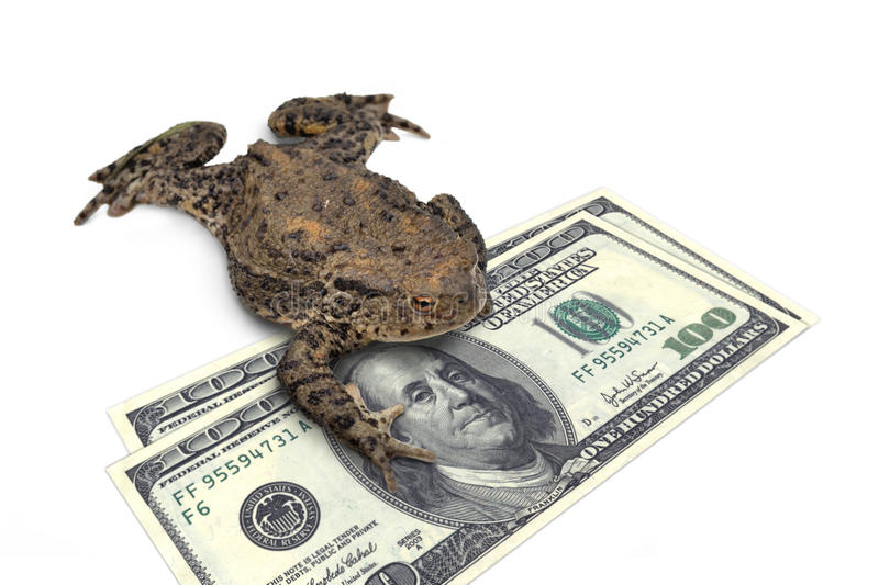 Vanity of vanities. Big toad holding bank notes stock images