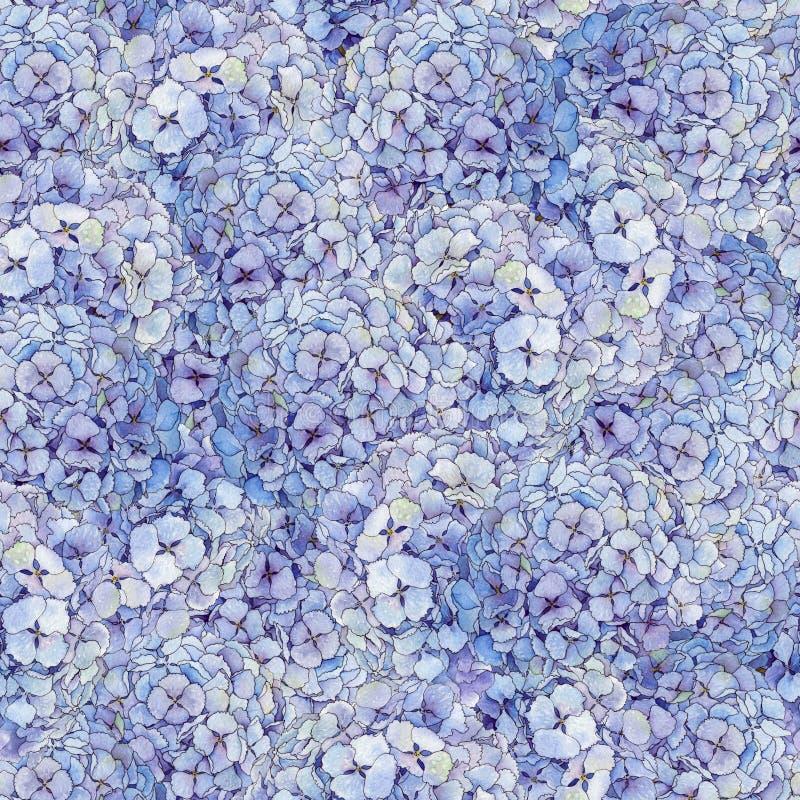 Vanlig hortensiablom arkivfoto