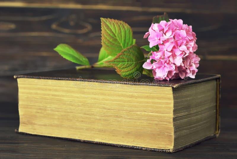 Vanlig hortensiablomma och gammal bok royaltyfri bild