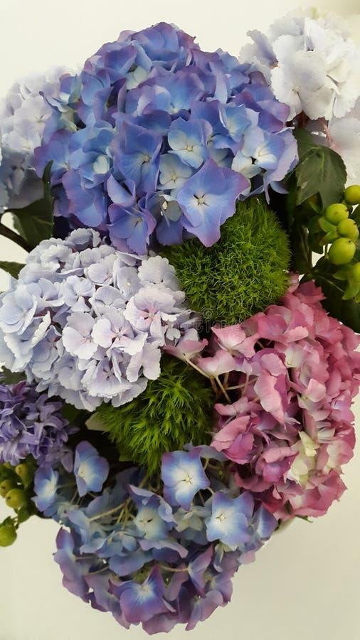 Vanlig hortensiabukett royaltyfria foton