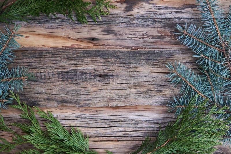 vanliga gamla tr?br?den med ris av s?rjer visare (julgranen), bakgrund f?r text, enkelt motiv royaltyfri fotografi