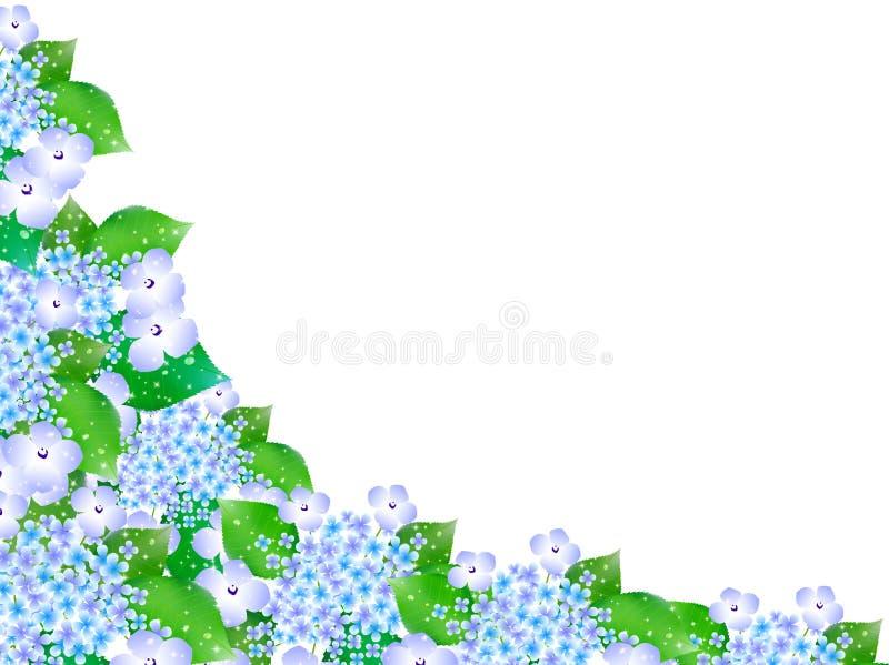 Vanliga hortensian blommar bakgrund för den regniga säsongen vektor illustrationer