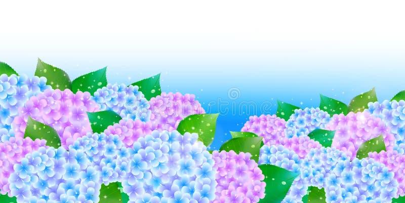 Vanliga hortensian blommar bakgrund för den regniga säsongen royaltyfri illustrationer