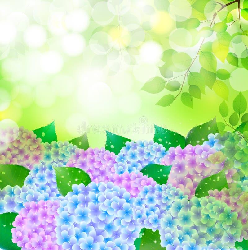 Vanliga hortensian blommar bakgrund för den regniga säsongen stock illustrationer