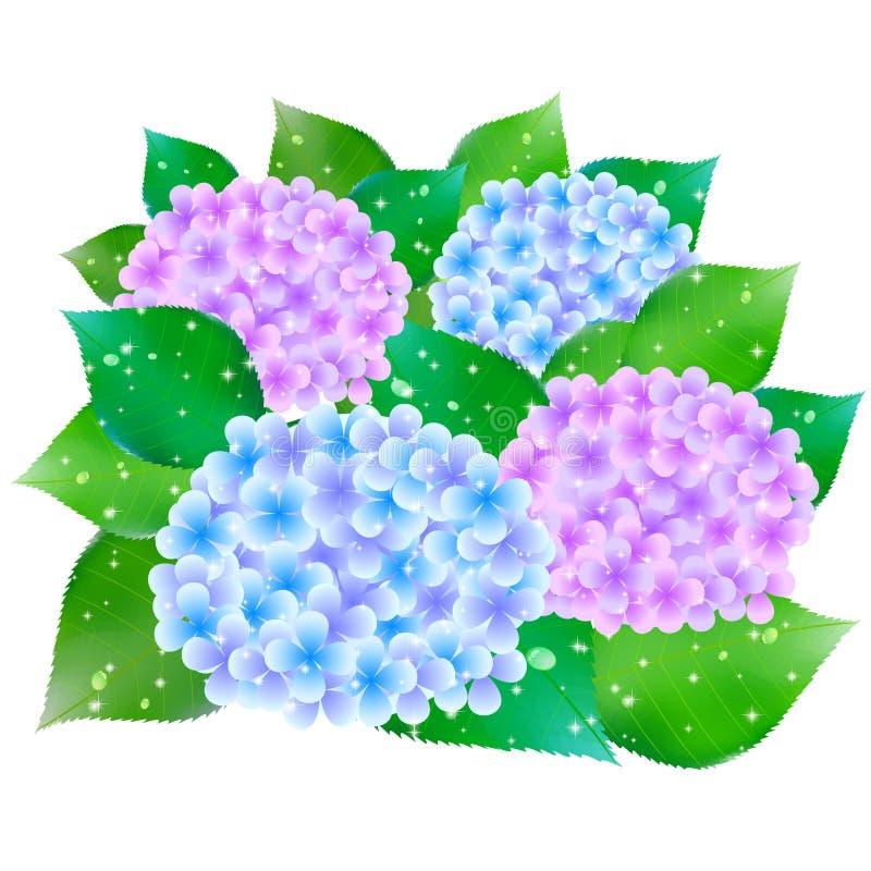 Vanliga hortensian blommar flaggan för den regniga säsongen vektor illustrationer