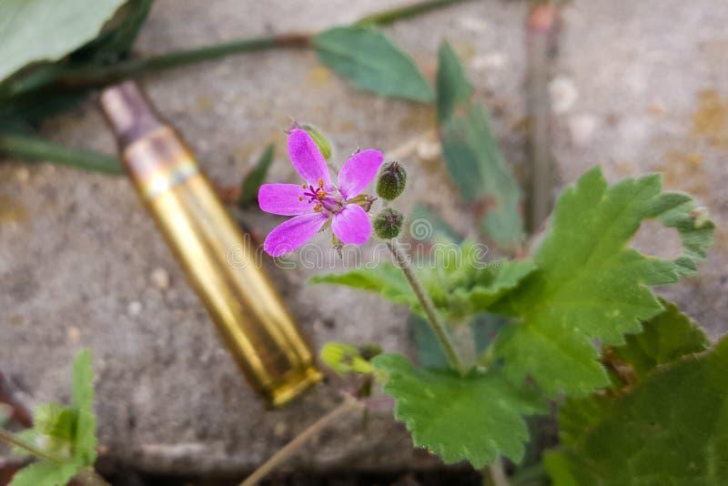 Vapen mot färgrika blommor och att välja mellan fred eller kriget Begrepp: stoppa konflikten, känn världsskönheten arkivfoton