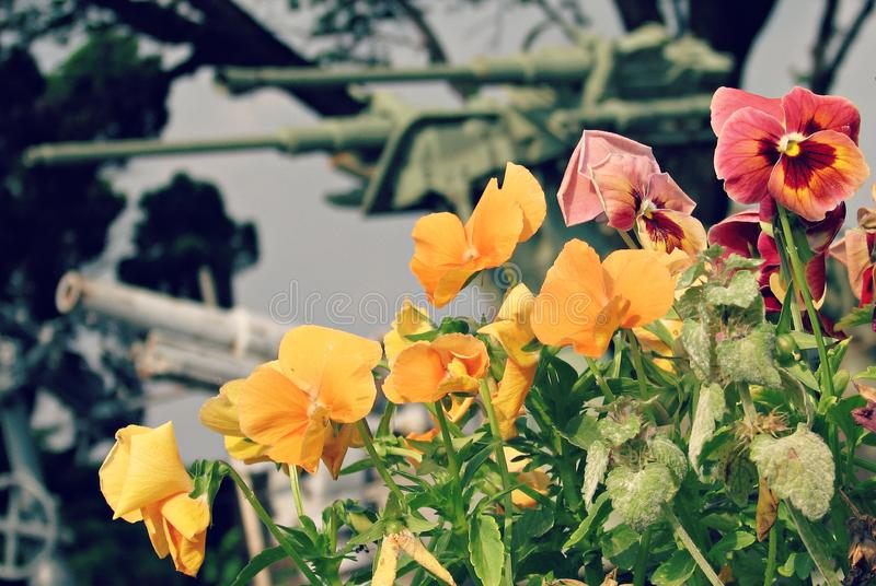 Vapen och rosor i Belgrade, Serbien royaltyfria foton
