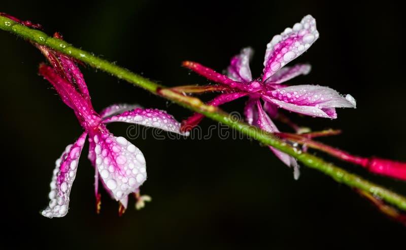 Vapeur de fleur images stock