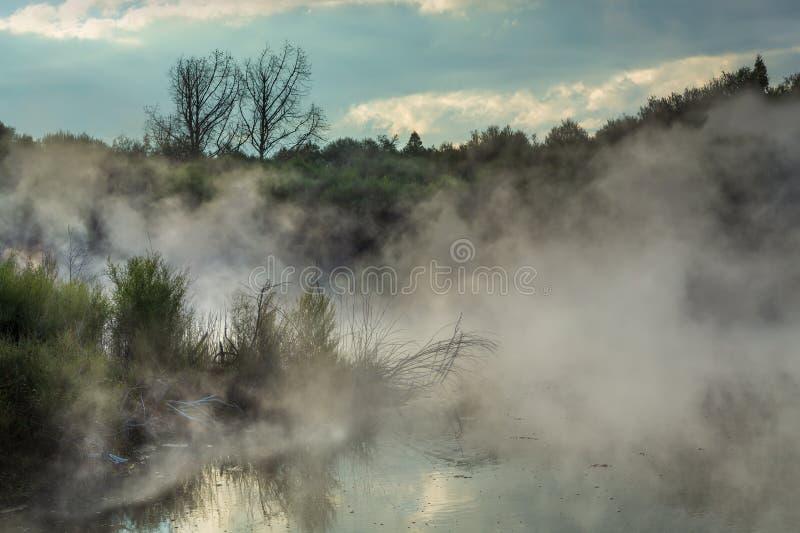 Vapeur se levant d'un lac géothermique dans Rotorua, Nouvelle-Zélande photographie stock
