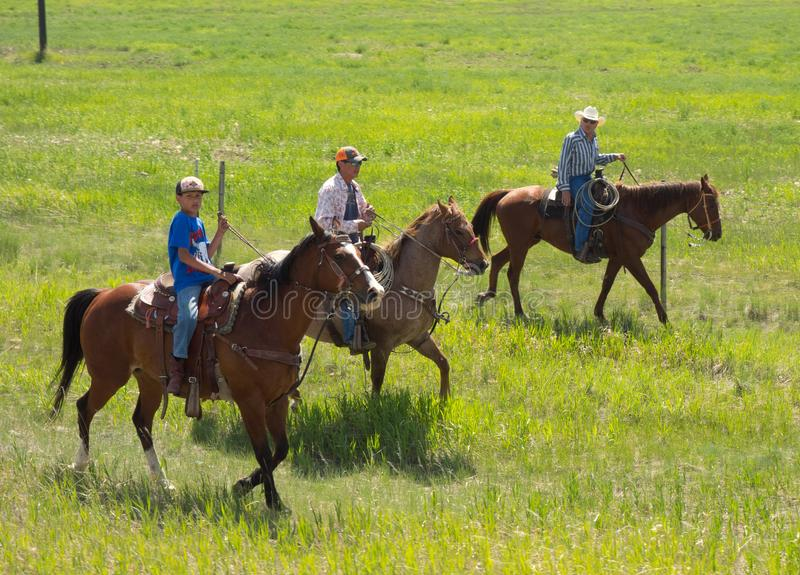 Vaqueiros que arredondam-se acima do gado como visto da estrada em wyoming foto de stock royalty free