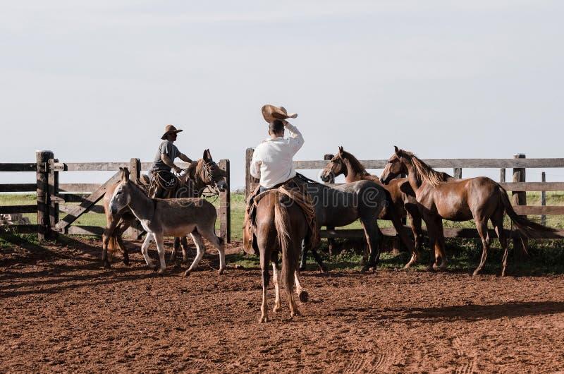 Vaqueiros que controlam os animais de exploração agrícola em uma cerca imagem de stock royalty free