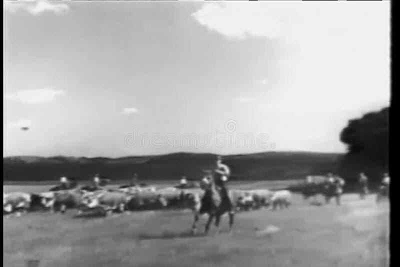 Vaqueiros que reunem o gado no rancho filme