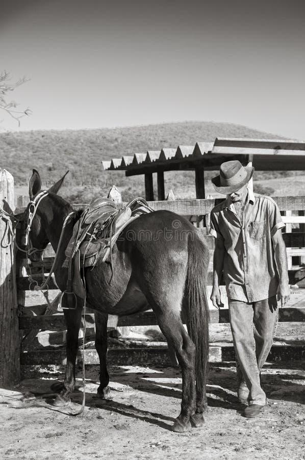 Vaquero brasileño con la mula imagen de archivo libre de regalías