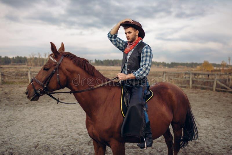 Vaquero que monta un caballo en el valle del desierto, occidental imagen de archivo libre de regalías