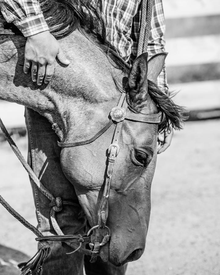 Vaquero y su caballo imagen de archivo libre de regalías