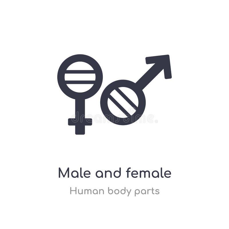 varón e icono femenino del esquema del género l?nea aislada ejemplo del vector de la colecci?n humana de las partes del cuerpo va ilustración del vector