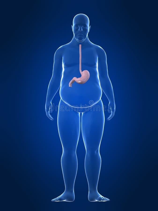 Varón gordo - estómago stock de ilustración