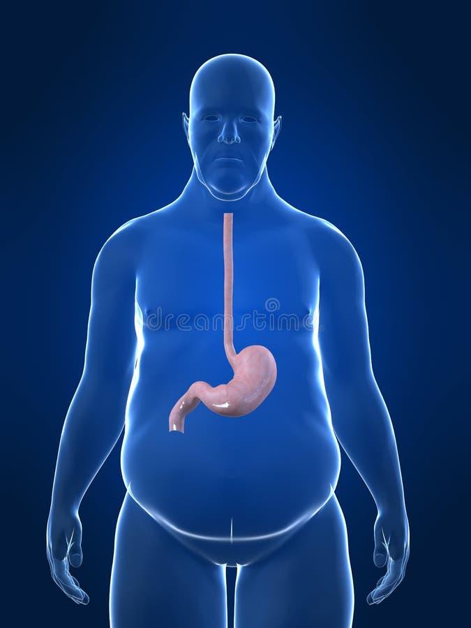 Varón gordo - estómago libre illustration