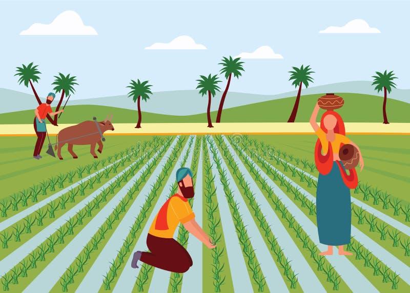 Varón indio y granjeros de sexo femenino que trabajan en estilo plano de la historieta del campo de arroz ilustración del vector