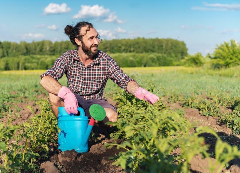 Varón joven del inconformista en guantes con una regadera que cuida para las patatas de las plantas en el jardín fotos de archivo