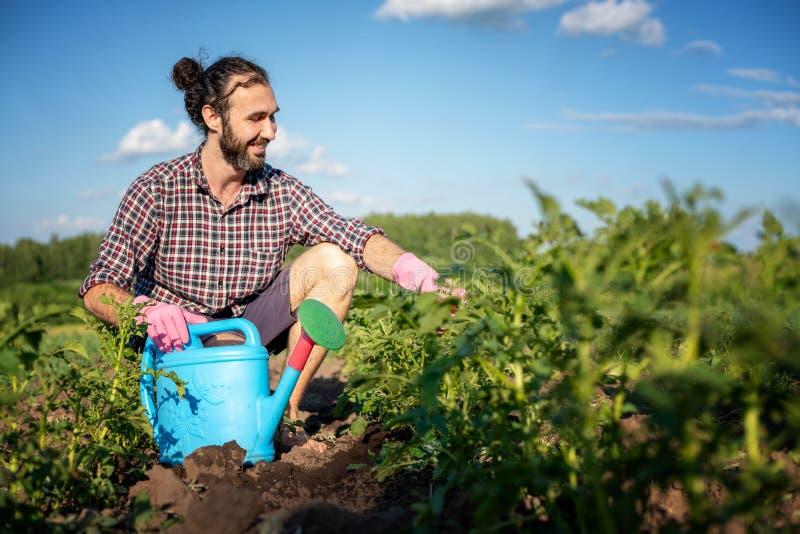 Varón joven del inconformista en guantes con una regadera que cuida para las patatas de las plantas en el jardín imagenes de archivo