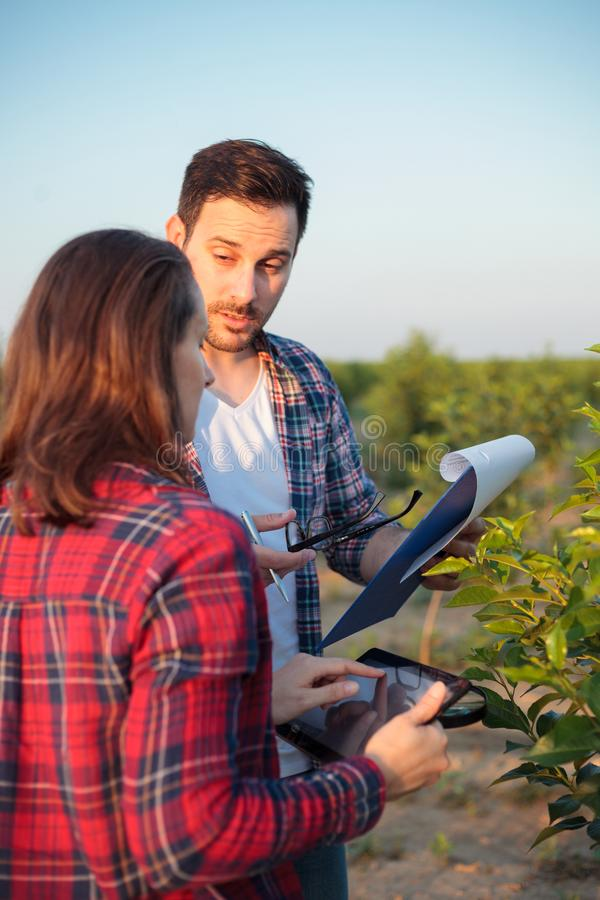 Varón joven serio y agrónomos o granjeros de sexo femenino que trabajan en una huerta de fruta La mujer está utilizando una table fotografía de archivo libre de regalías