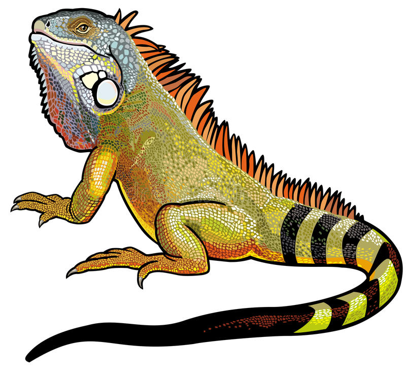 Iguana verde libre illustration